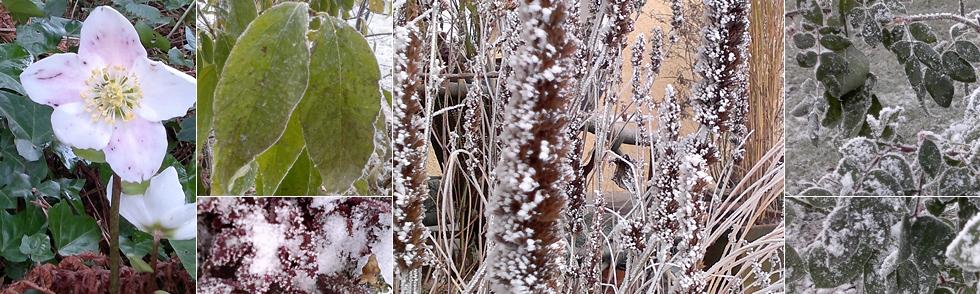 gartentipps für den winter: was sollten sie unbedingt beachten, Garten und erstellen